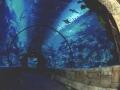 mandalay_bay_las_vegas_aquarium