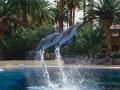mirage_las_vegas_dolphins